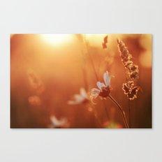 Sweet Summer Memories Canvas Print