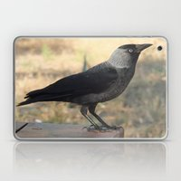 Side View Of A Wild Jack… Laptop & iPad Skin