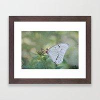 White Morpho Butterfly Framed Art Print
