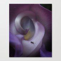 Purple Snail Flower Canvas Print