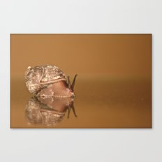 Gary The Snail Canvas Print