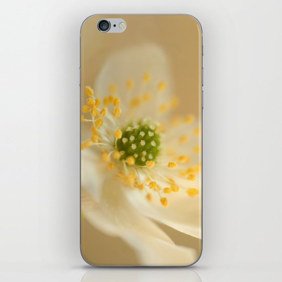 Blossom In Creme iPhone & iPod Skin