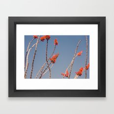 Ocotillo In Bloom Framed Art Print