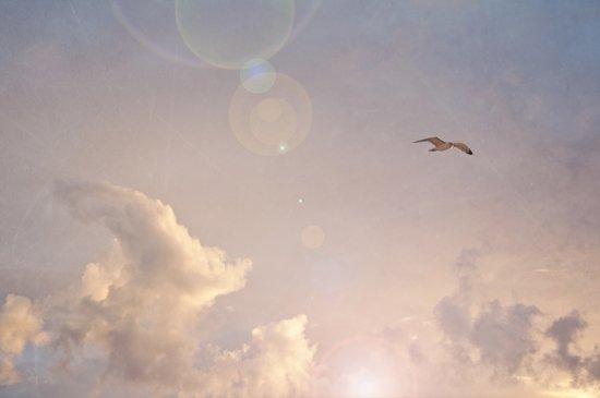 Seagull In the Clouds Art Print