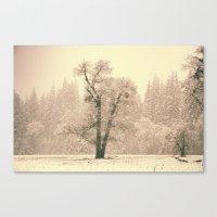 Yosemite Lonely Tree Canvas Print