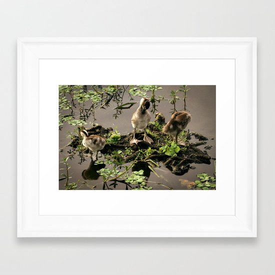 Ducklings Framed Art Print