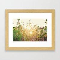 Sun Rising Framed Art Print
