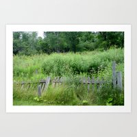 Fence Overgrown Art Print