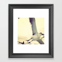 Gull, Closeup  Framed Art Print