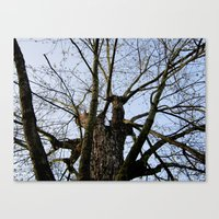 Youth Upon My Limbs I Canvas Print