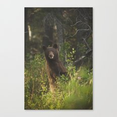 Black Bear Smile Canvas Print