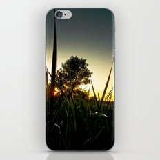 Slice of the Sky iPhone & iPod Skin