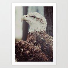 Young Eagle Art Print