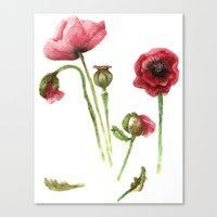 Red Poppies - Botanical Art - watercolor Canvas Print