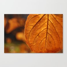 Sun-drenched leaf Canvas Print