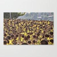 Sunflower 11 Canvas Print