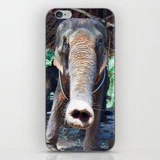 Elephant Thailand iPhone & iPod Skin