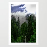 Canadian Forest Art Print
