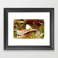Cabbage White Butterfly Framed Art Print
