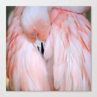 Flamingo #2 Canvas Print