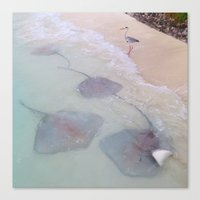 Maldives bird waves sting rays Canvas Print