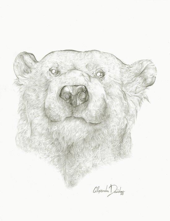 A Polar Bear  Art Print