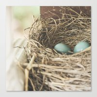 Robin Eggs in nest Canvas Print