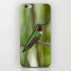 Perched Hummingbird iPhone & iPod Skin