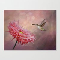 A Hummingbirds Dance Canvas Print