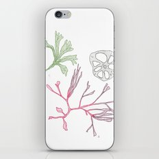 Seaweed and Lotus Root iPhone & iPod Skin