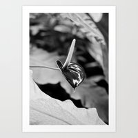 Vegetal Portrait I: Chocolate Flower Art Print