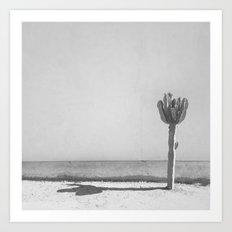 Cactus - in Black & White Art Print