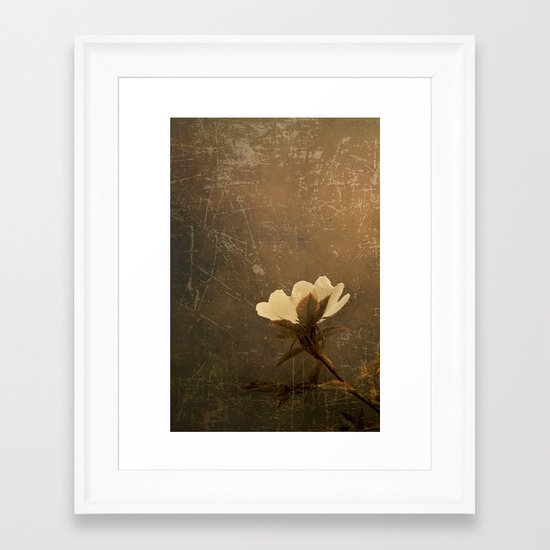 Wild Old Rose Framed Art Print