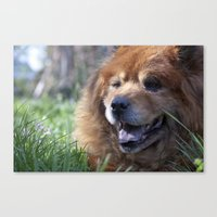 Yogi, the adorable Chow Chow Canvas Print