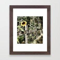 Caged Sunflowers Framed Art Print