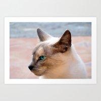 A Siamese Cat study Art Print