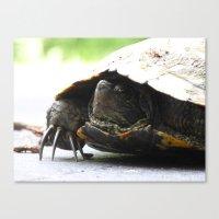 turtle 2016 Canvas Print