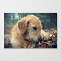 Sweet Dog Canvas Print