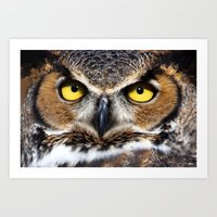 Great Horned Owl Face Art Print