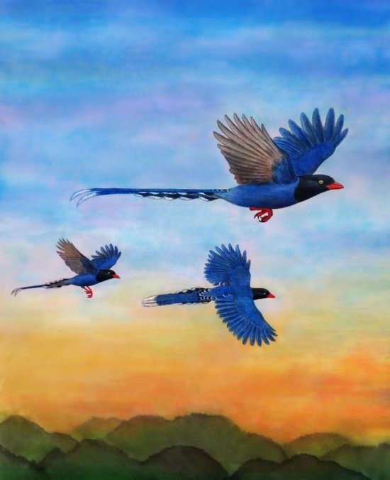Taiwan Blue Magpies (2) Art Print