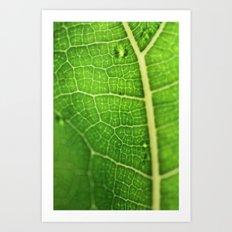 Fiddle Leaf Ficus Tree Art Print