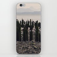 Pelicans iPhone & iPod Skin