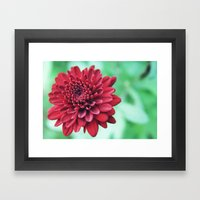 Chrysanthemum Framed Art Print