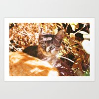 Cat In The Shadows Art Print
