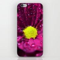 purple bloom II iPhone & iPod Skin