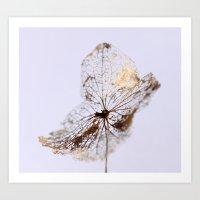 Delicate  - JUSTART © Art Print