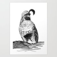 Gamble's Quail Art Print