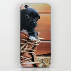Teddy.  iPhone & iPod Skin