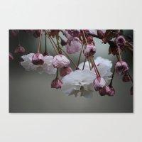 Zierapfel Blüte   Canvas Print