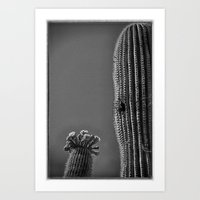 Saguaro in Bloom V1 Art Print